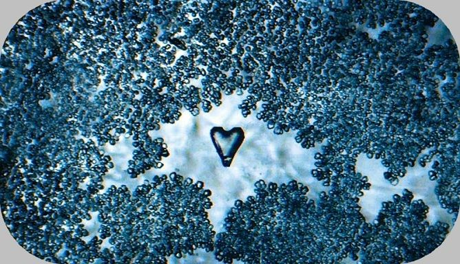 Incríveis imagens de gotículas de água feitas com microscópio manual