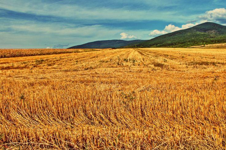 Hungarian countryside