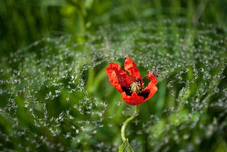 15фото одикой природе— самом неизведанном, что есть наЗемле