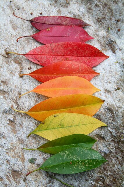 Autumn colour hunt - Understanding of the world - focusing on the changes of colours around them!