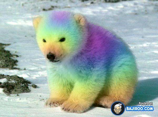 72 best images about Magnificent Colorful Fur  Mane on Pinterest
