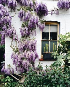 gorgeous purple plant on white brick home