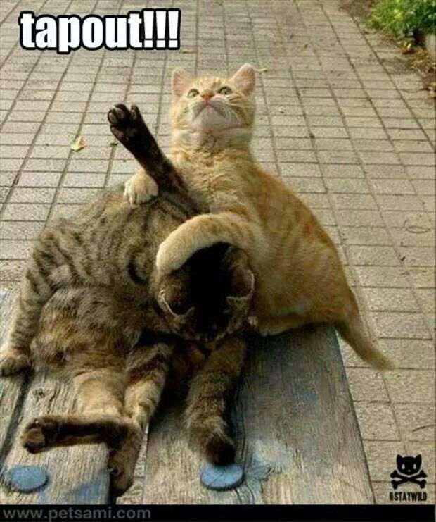 6428ccad0e313a846333c1b811924ca9 pictures of animals funny animal pictures 35 best tapout images on pinterest mixed martial arts, lucha