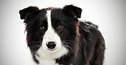 Las cinco razas de perros más inteligentes