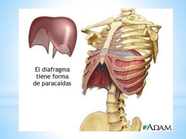 Mejores 200 imágenes de RX en Pinterest | Medicina, 15 de febrero y ...