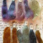 Henna/plant dyes: mohair tests