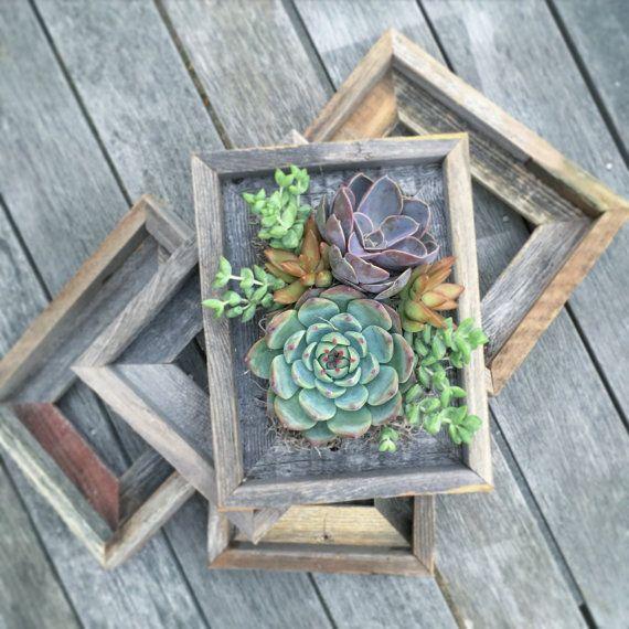 Suculentos jardines verticales diseñados en estos marcos de madera estilo vintage con madera estilo granero maravilloso. Cada una variará