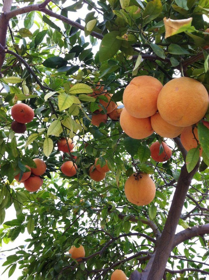 открыто фрукты растут на деревьях картинки для интриги поднятия