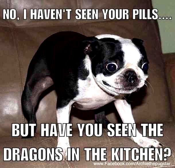 12 Funny Dog Memes And Pictures That Will Definitely Make You Laugh Crazyfunnymemes Funny Dog Memes Funny Dog Pictures Funny Animals