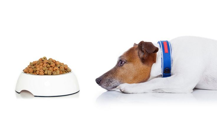 Few things are as worrying as when your dog stops eating or refuses food. There are many reasons why your dog won't eat, but it's important to find out what those reasons of anorexia are so that they can be remedied. Sometimes, your dog may need veterinary help before he'll regain appetite. #doghealth #pethealth #dogs #pets #feeding #nutrition