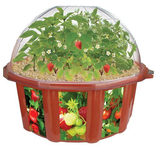 276 best botany images on pinterest botany learning toys and dunecraft doomsday vegetables all star collection terrarium additional details workwithnaturefo
