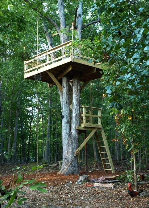 30 tree perch and lookout deck ideas adding fun diy for Small tree house