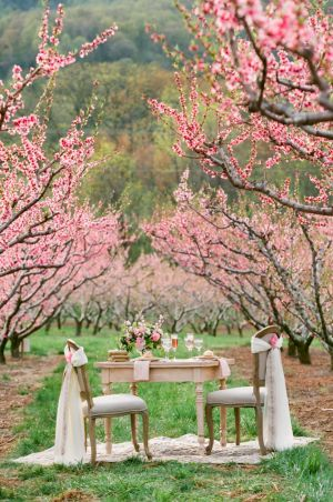 Southern Cherry Blossom Wedding Ideas | photography by http://www.jenfariello.com