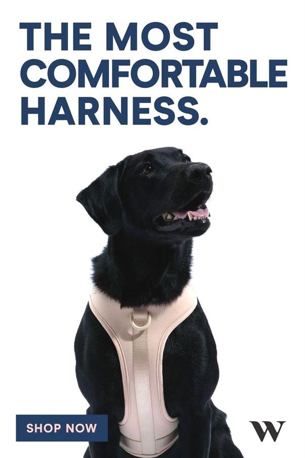 Dog Training Gone Wrong Perfect Dog Training System Dog