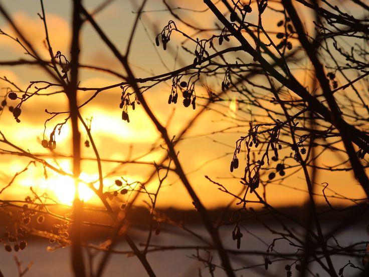 #Christmas #Wintersun #Sunset #Tapaninpäivä #Talviaurinko #Auringonlasku #mökki #Finland