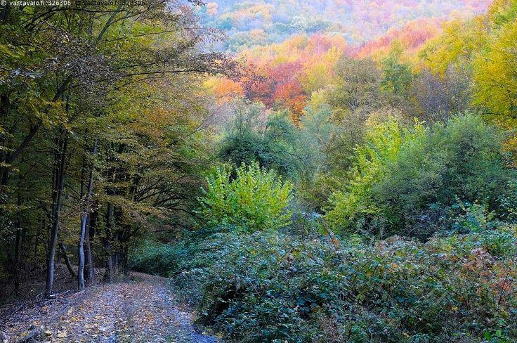 Syksyn kirjo - syksy ruska värikäs kirjo kirjava metsä lehtimetsä metsätie tie polku