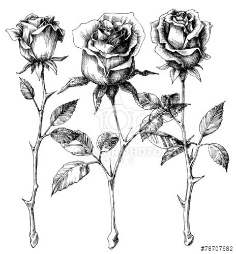 Single roses drawing set