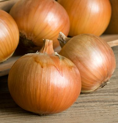 Patterson onion - Johnny Seeds