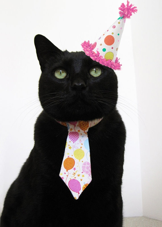 Cat Tie - (the hat was Photoshopped, but isn't it cute???)  They sell ties.