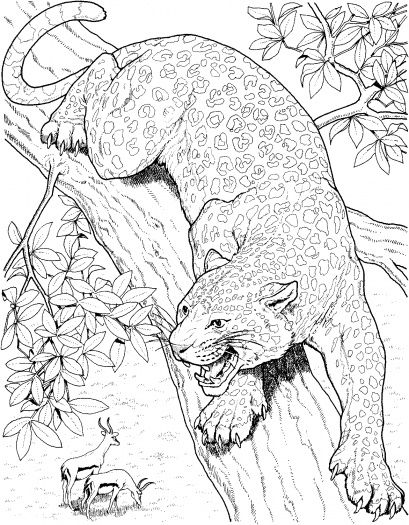 malbuchseiten von bäumen  malvorlagen leopard roars on