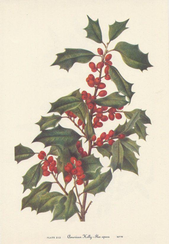 Vintage Botanical Print Wildflowers
