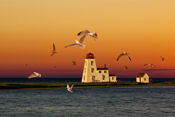Cascumpec Lighthouse with Flying Gulls at by RandyNyhofPhotos