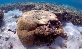 Planet Stars: SOS εκπέμπει ο μεγάλος κοραλλιογενής ύφαλος της Αυ...