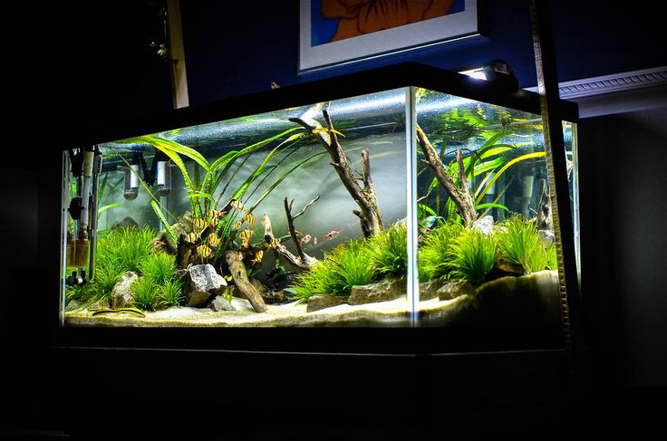 40 gallon planted tank ei dosing method used source for Fish tank ice method