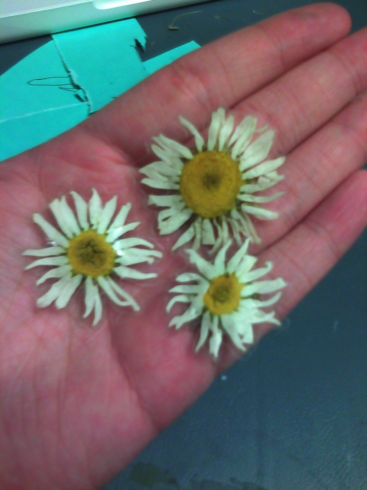 50 best dried flower crafts images on pinterest dry for Dried flowers for crafts