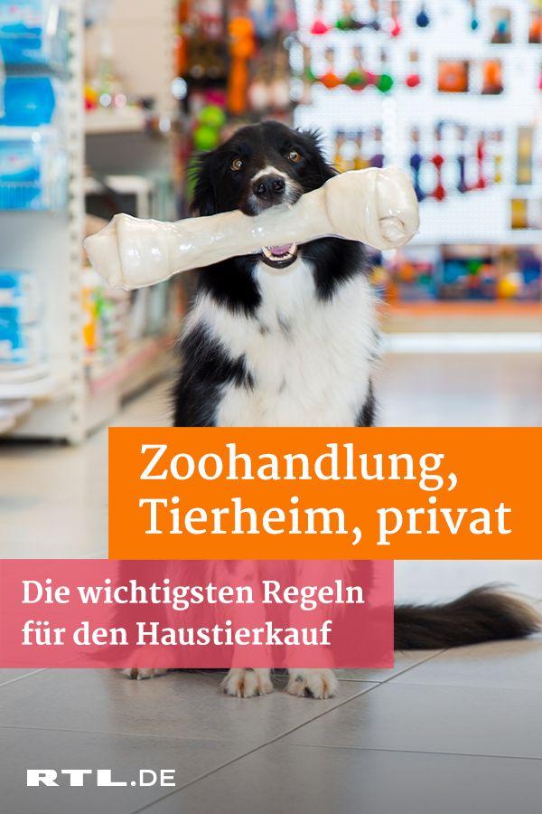 Haustiere kaufen Zoohandlung, Tierheim oder von privat