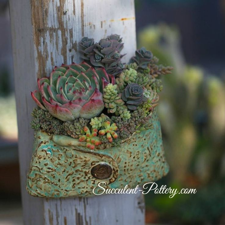 Nice succulent arrangement and pot by Donna Davis Taylor