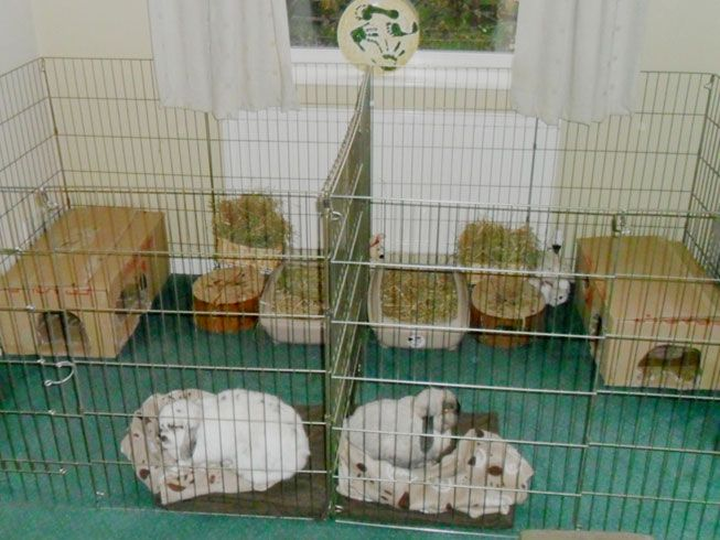Rabbit Homes Amp Hutches For Indoors Large Accommodation