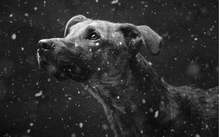 """maybe-if-one-day: """" Если душа — это умение любить, быть преданным и благодарным, то животные обладают ею в большей степени, чем многие люди. photo by Elke Fogelzang """""""