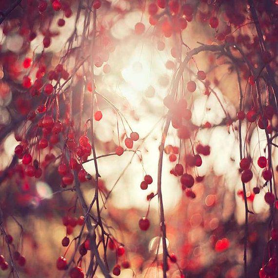 Red decor, Cranberry red berries, Gardening, spring nature art, photography, garden, sun, Oht