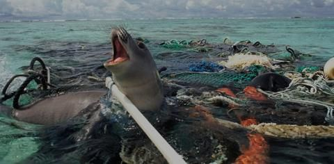 First off, what is marine debris?Marine debris, as defined by NOAA (The National Ocean and Atmospheric Administration) is any persistent solid material that is manufactured or processed and directly or indirectly, intentionally or unint...