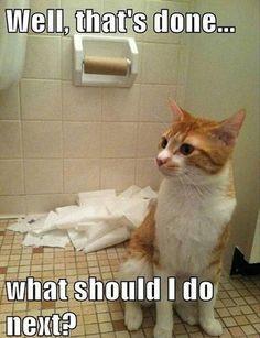 xo ....10 Funny Pet Memes |