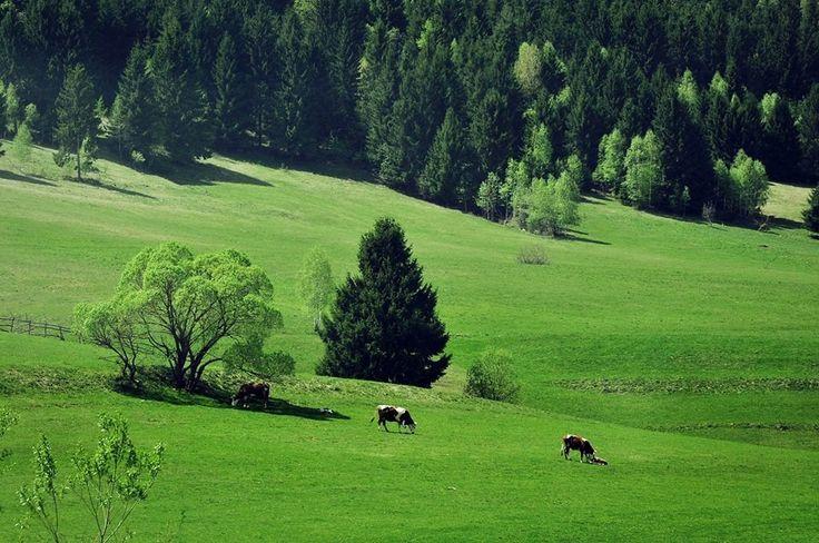 Fent a Kászonokban - Székelyföld - Erdély   fotó Káté Antónia