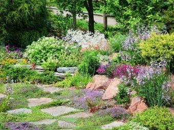 Skalniak w ogrodzie - poradnik zakładania skalniaka krok po kroku