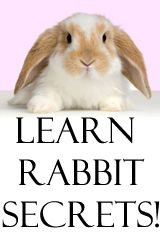 What Do Rabbits Eat - Mini Lop Rabbits! Mini Lops information! Mini Lop training, mini lop bunnies and hut info and more!
