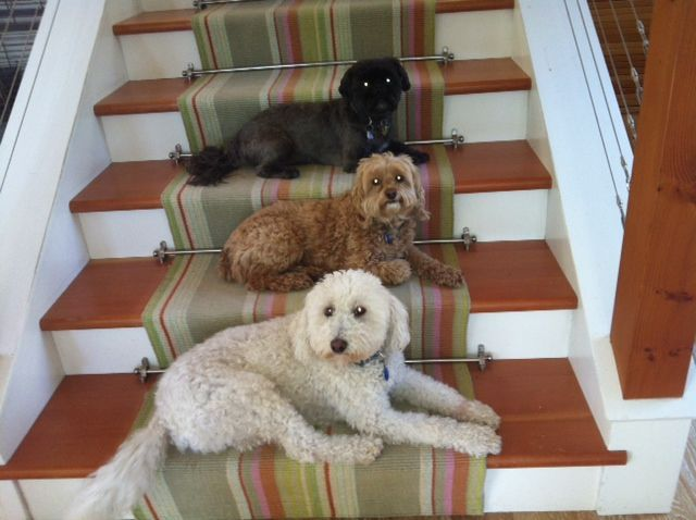 Stairway to dog heaven. Guess which one is me!