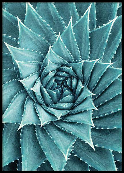 Aloe, poster i gruppen Posters och prints / Storlekar / 30x40cm hos Desenio AB (8480)