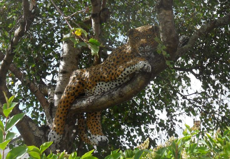 Leopard revamped