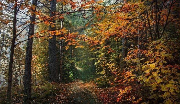 """""""Ez már az ősz. Borzongva kél a nap. Közeleg a rozsdaszínű áradat. Átzúg kertek, erdők, hegyek fölött - elnémul a rigó, el a tücsök...""""  Zelk Zoltán"""
