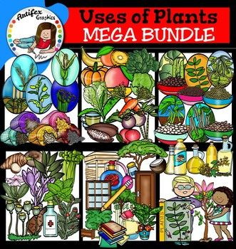 Uses of Plants clip art  Mega bundle contains 122 image files, which includes 61 color images and 61 black & white images in png.includes:FOODCereals: Barley grain, barley plant, maize grain, maize plant, pearl millet grain, pearl millet plant, rice grain, rice plant, sorghum grain, sorghum plant.Fruits: banana, mango, orange, pumpkin.Leaves: cabbage, lettuce, spinach.Pulses: dry bean plant, dry beans, lentil plant, lentils, mung bean plant, mungs, navy bean plant, navy beans, pinto bean ...