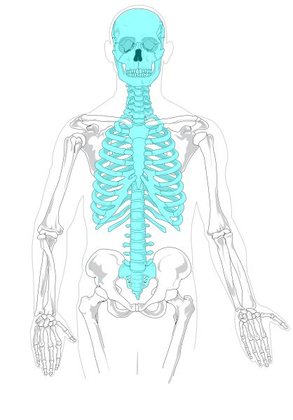 Axial skeleton diagram blank. - Week 2 CC Cycle 3 Science notebooking page
