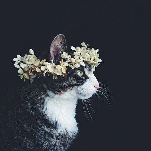 • cat beautiful hippie hipster stunning vintage indie Grunge kitten flowers connor franta tumblr worthy lifeismymiracle •