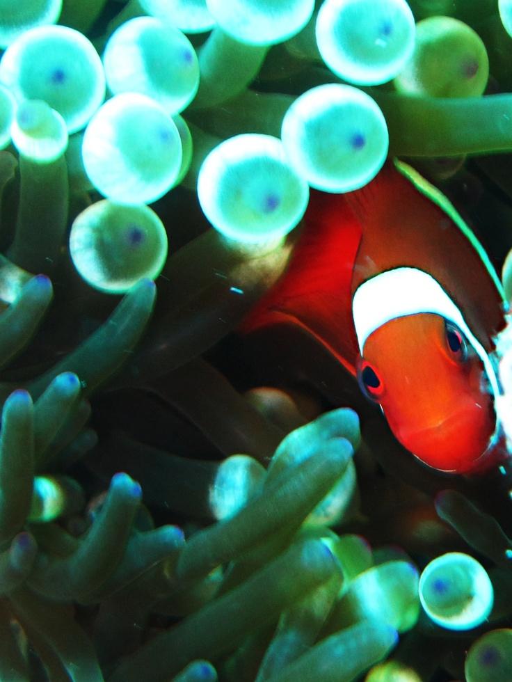 Nemo Wakatobi Indonesia