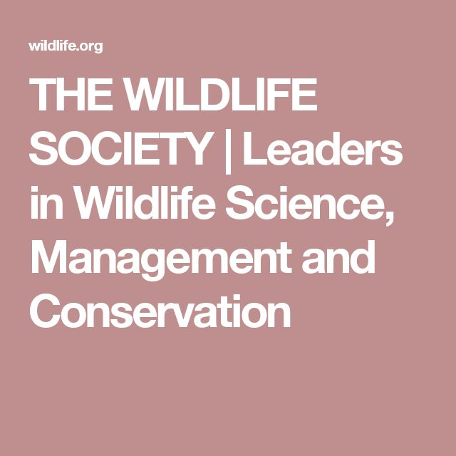THE WILDLIFE SOCIETY   Leaders in Wildlife Science, Management and Conservation