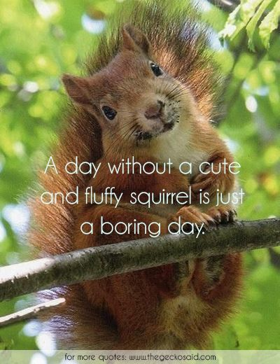 A day without a cute and fluffy squirrel is just another boring day.  #animals #boring #cute #day #fluffy #quotes #squirrel #without