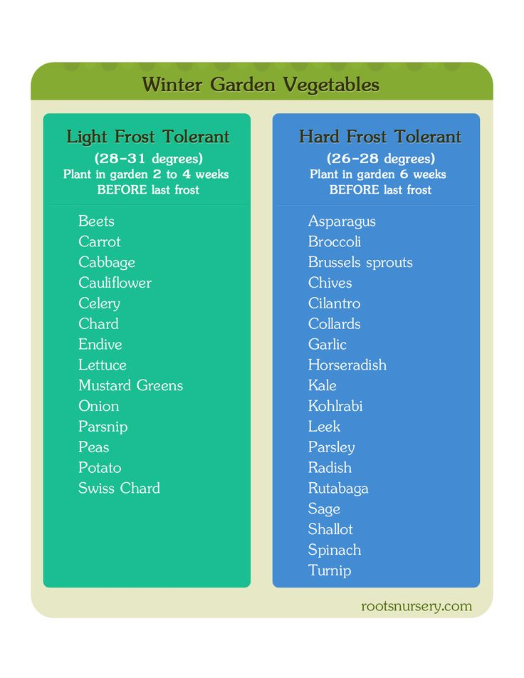 Winter Garden Vegetable Starter Chart